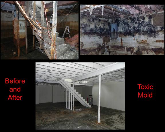 Mold Restoration, Mold Damage, Mold, Toxic Mold, Toxic Mold Restoration, Toxic Mold Damage